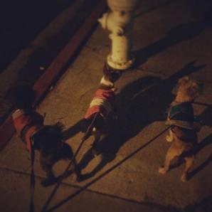 dogswalkingfbeventpic