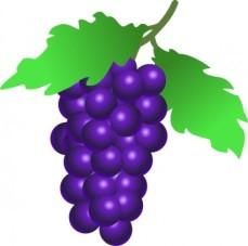 grapes_vine_clip_art_11687