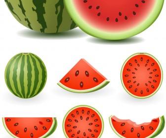 watermelon-vector-336x280